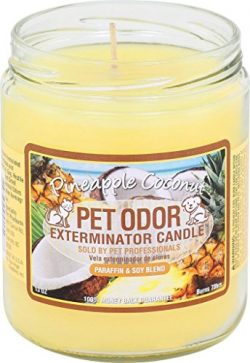 Pet Odor Exterminator Jar Candle – Pineapple & Coconut