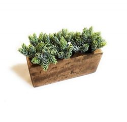 Rustic Farmhouse 3 Hole Wooden Candle Holder- Sugar Mold Candle Holder-Succulent Planter