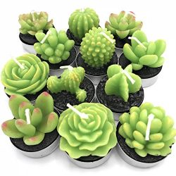 TINKERTORY Jasmine Scented Succulent Cactus Candles Decor in Tealight holders 12 Unique Designs